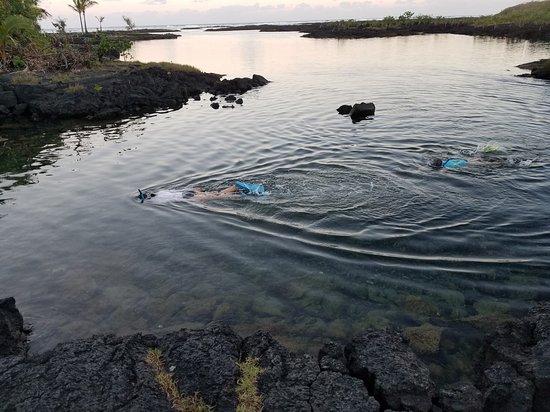 Pahoa, HI: Kapoho Tide Pools