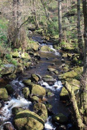 Longshaw Estate: The brook.