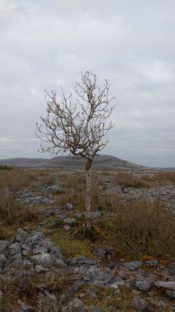 Corofin, Ierland: The Burren National Park