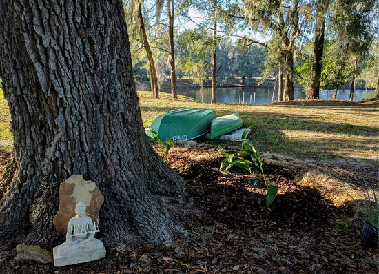 Alachua, FL: Under one of the venerable live oaks that grace this land