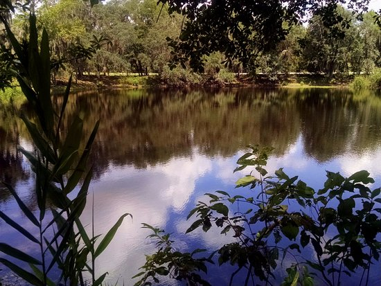 Alachua, FL: View from nature trail around Deep Spring Pond: 35' deep, 1 acre across