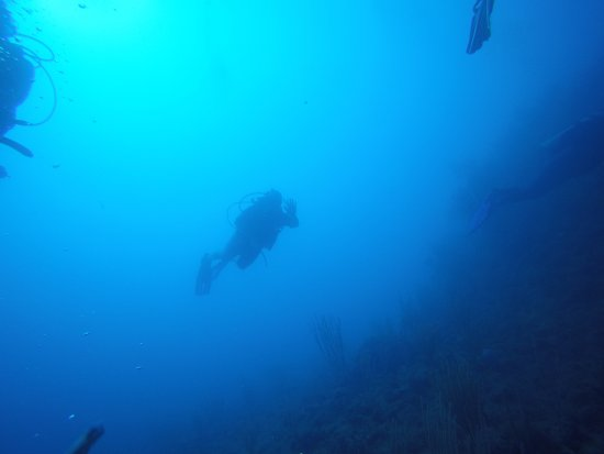 Northern Coast Diving: poor visibility