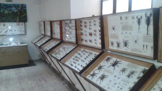 Museo Entomologico de Vicuna