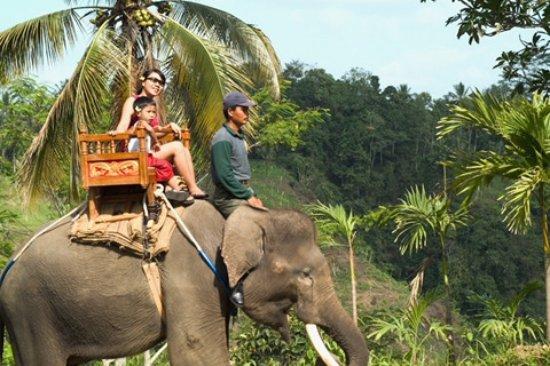 Bali Wisata Murah: Elephant Ride