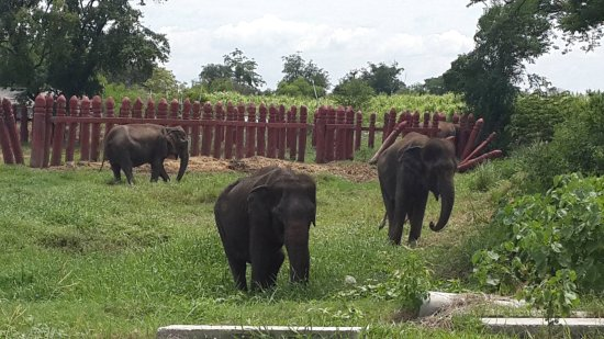 Elephantstay: Out and about roaming