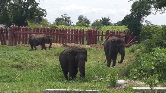 Elephant Stay Royal Elephant Kraal and Village