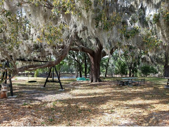 Alachua, FL: Swing and Picnic Tables under the live oaks next to pond