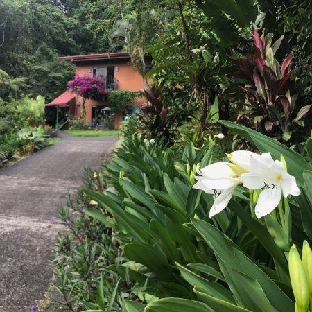 Nuevo Arenal, Kostaryka: photo6.jpg