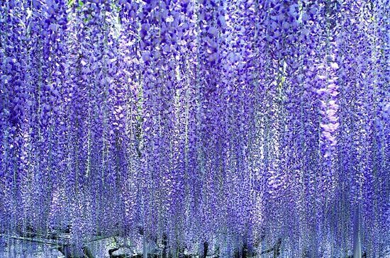Hitachi Seaside Park, Ashikaga Flower...