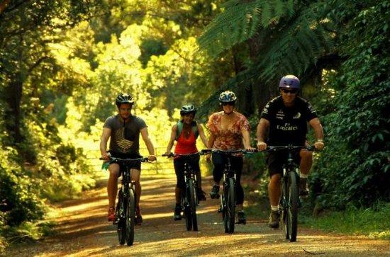 Rimutaka Rail Trail Cycle Tour from...