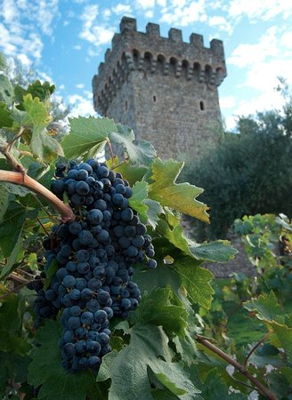 Let S Roll Wine Tours