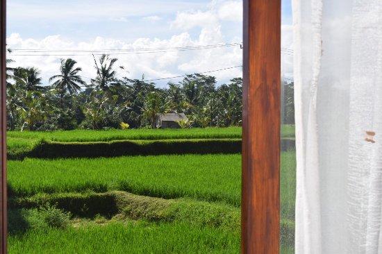 Peacefully And Beautiful Rice Paddies