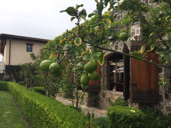 Jacuzzi Family Vineyards: photo3.jpg