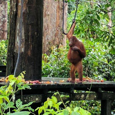 Sepilok, Malaysia: IMG_20170407_073002_879_large.jpg