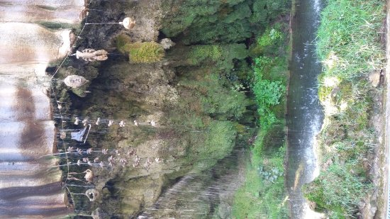 Mother Shipton's Cave and The Petrifying Well