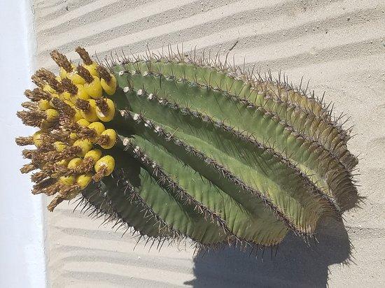 Las Ventanas al Paraiso, A Rosewood Resort: 20170331_144510_large.jpg