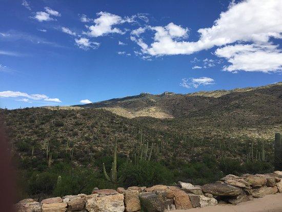 Tucson, AZ: Saguaro National Park View