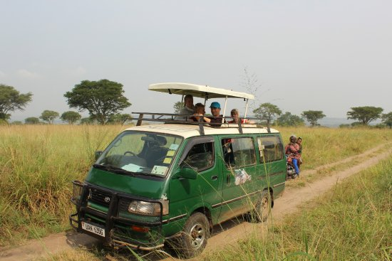 Kasese, Uganda: game drive in Murchison falls national park