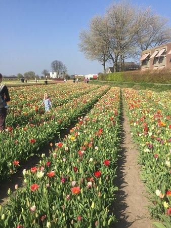 Hillegom, Nederland: photo5.jpg