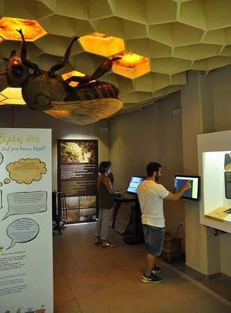 Bee Museum: Interactive Section of Museum