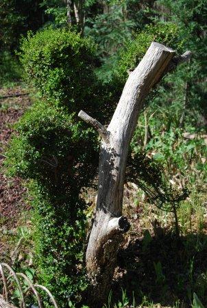 Mono en el rbol picture of el bosque encantado san - El arbol encantado ...