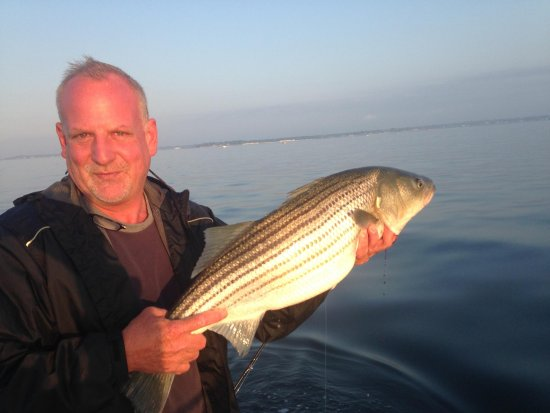 Cos Cob, CT: Captain practicing CPR (catch, photo, release) on a young Stripped Bass on a flat calm day.