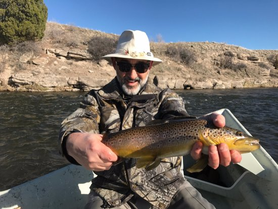 FishTales Outfitting - Day Trips: Big brown trout on the Madison