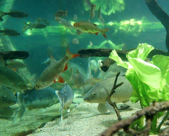 L'aquarium des Curieux de la Nature