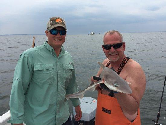 Cos Cob, CT: feisty sand shark