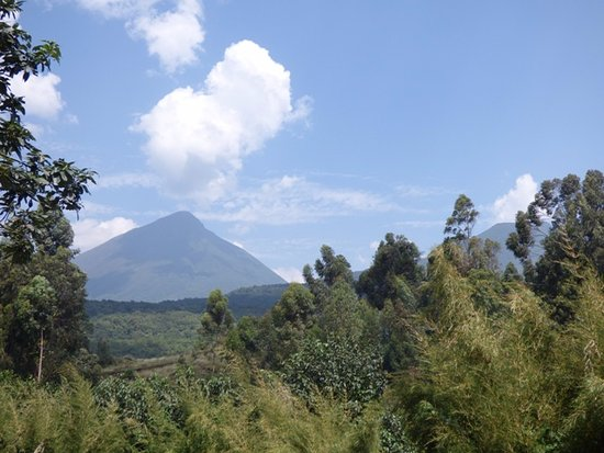 Bwindi Impenetrable National Park, Uganda: View of the Virunga Volcanoes