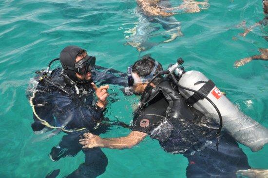 Sinai Rose Diving Center