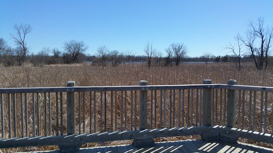 Libertyville, IL: Hastings Lake Forest Preserve. The wooden path walkway through the wetlands.