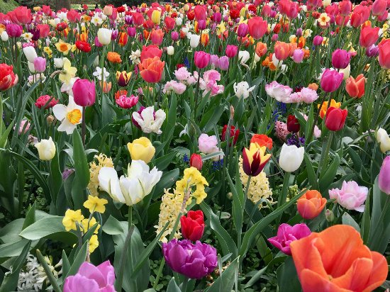 Beautiful Flowers Everywhere Picture Of Floralia Spring Flower