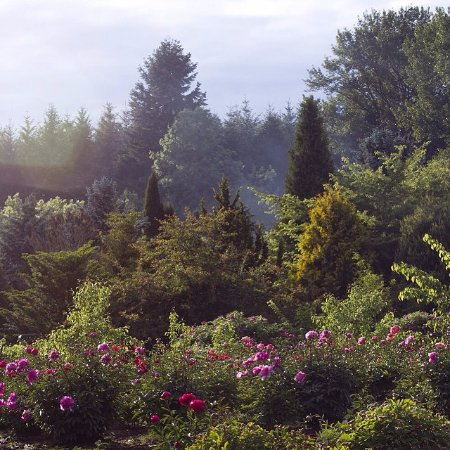 Brooks Gardens - the back gardens with strolling paths through conifer, iris and peonies.