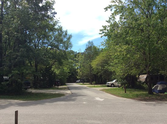 James Island County Park Campground & Cottages: View from our camp site. The