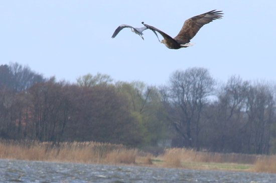 Usedom Island, Germany: Einzigartige Avifauna