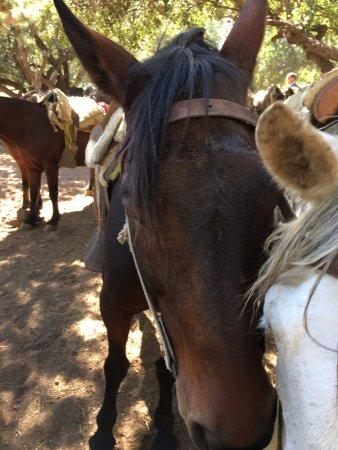 Cascada de las Animas: Sleepy horses