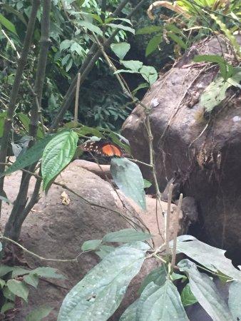 Uvita, Costa Rica: lots of butterflies