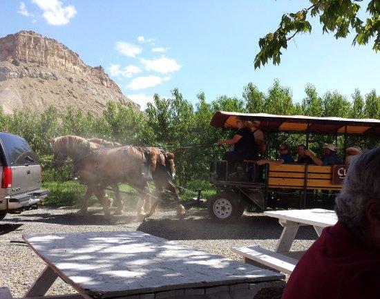 """Palisade, Kolorado: Tour """"bus"""""""