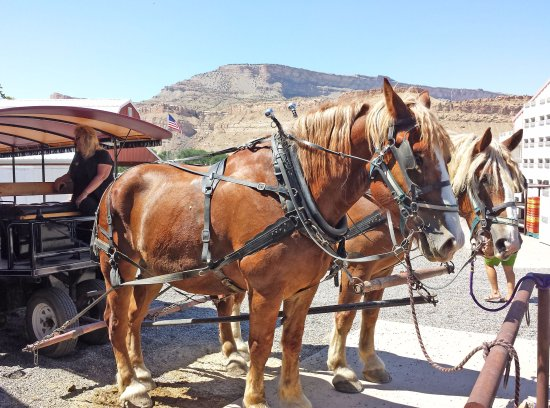 Palisade, CO: Horses that take you on the tour
