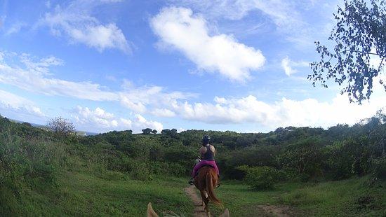 Esperanza Riding Company : Horseback Riding through Vieques