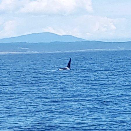 Edmonds, WA: orca!