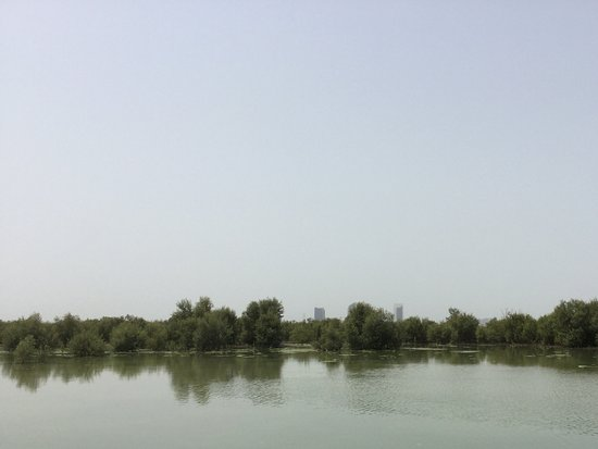 how to save mangroves in uae Abu dhabi hosts approximately 110 km2 of both natural and planted  (ead)  works to rehabilitate and protect mangrove forests in seven key.