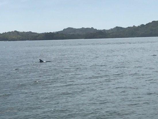 Boca Chica, Panama: photo5.jpg