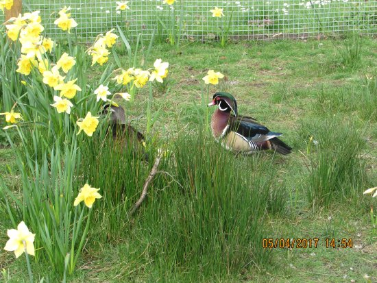 Burscough, UK : its Easter