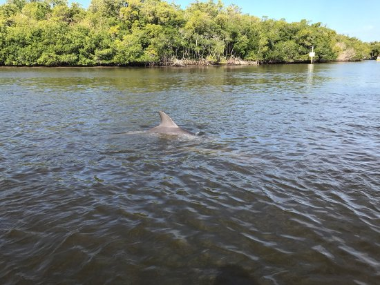 Everglades City Airboat Tours: photo0.jpg