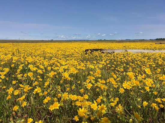 Oroville, كاليفورنيا: Just a small sample of the fields.