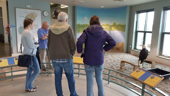 National Eagle Center: see them up close