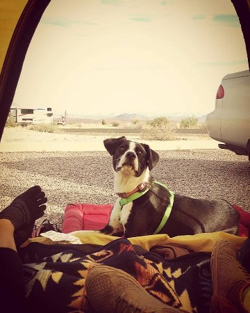 Fountain Hills, Аризона: Lucy enjoyed relaxing in our site for Thanksgiving.  Really close to the restrooms/showers too!