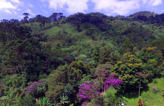 Um Lugar De Mato Verde Foto